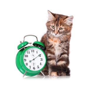 kitten clock