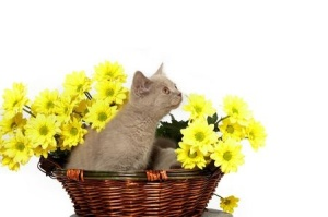 kitten flower basket