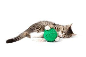 kitten yarn