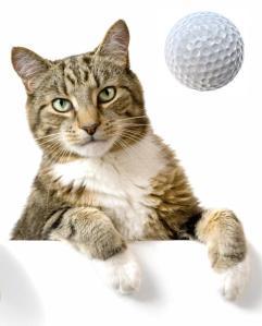 golfing cat